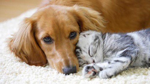 Dogs versus cats: Scientists reveal which one is smarter