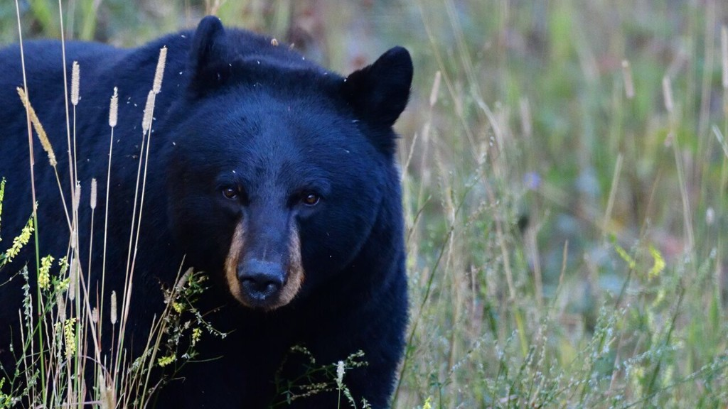 Virginia woman seen in viral TikTok feeding bear faces criminal charges, authorities say