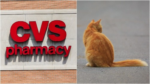 Philadelphia residents try to find home for 'CVS Cat' abandoned by owners