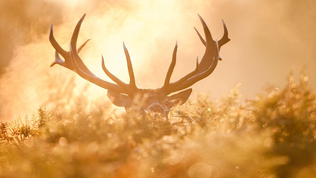 Deer hunting season will be different in Michigan due to pandemic, officials say
