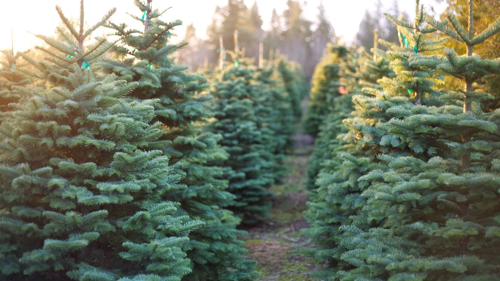 $2,000 for a Christmas tree? Customers paying a higher price: WSJ
