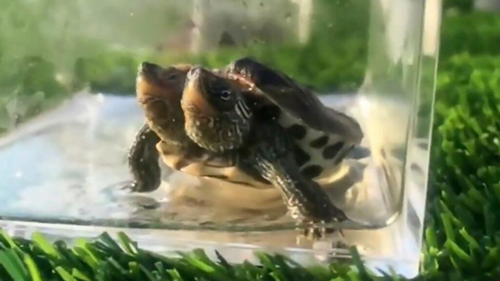 Turtles, Etc. - cover