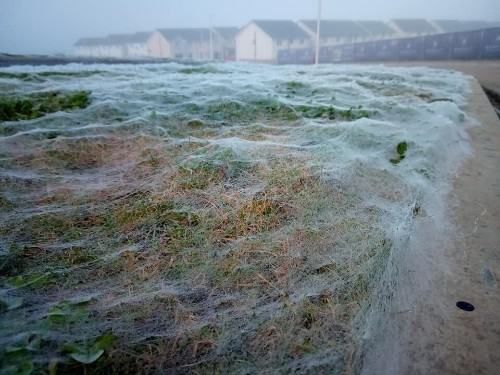 Giant spider web confused for frost blankets road verge in Scotland, incredible photos show