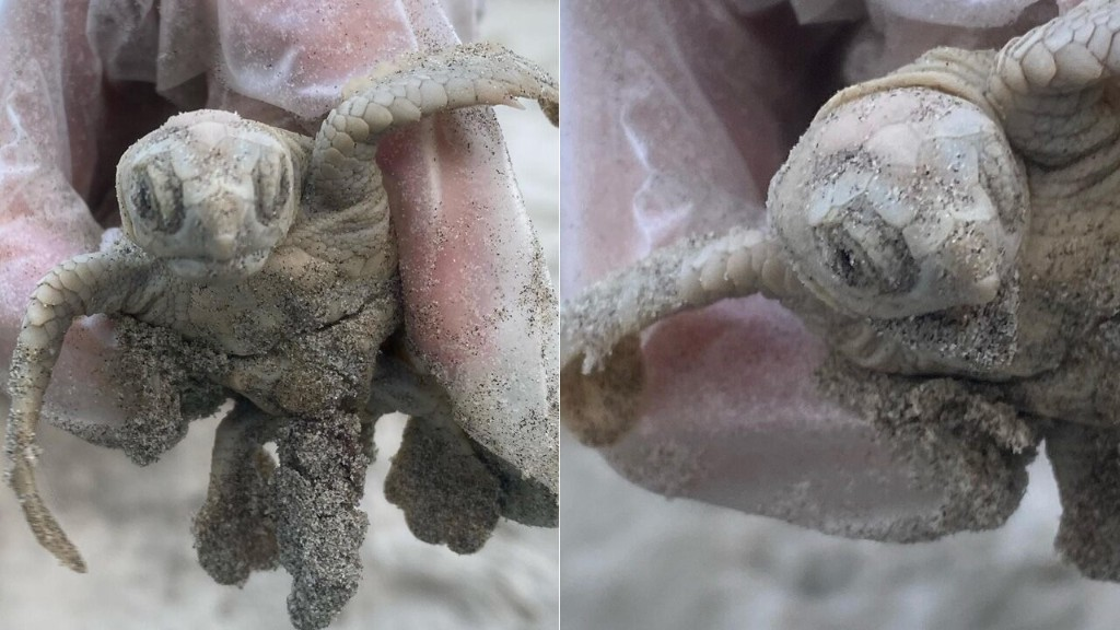 Rare sea turtle discovered on South Carolina beach in 'elusive' find