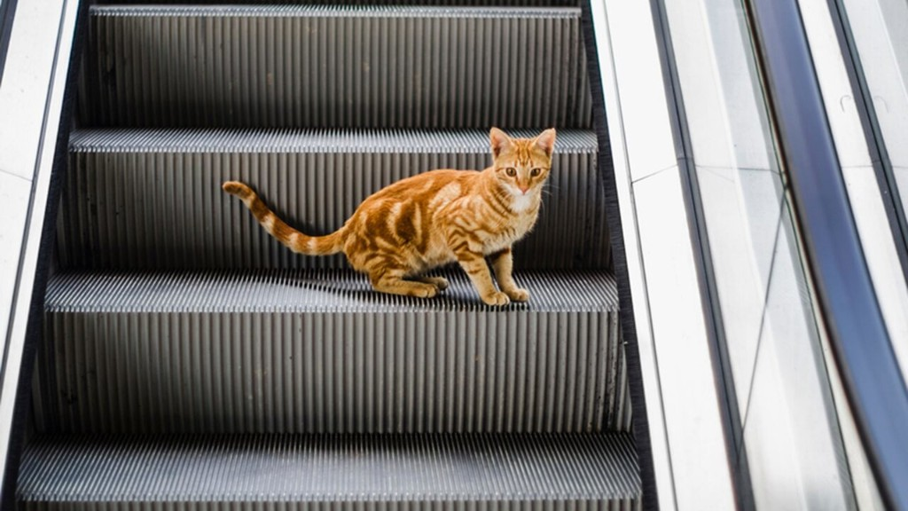 Clip of cat walking the wrong way down an escalator goes viral