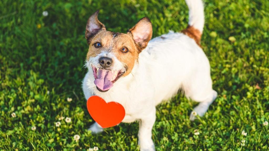 Pet dating site 'Pinder' helps animals find love, friendship
