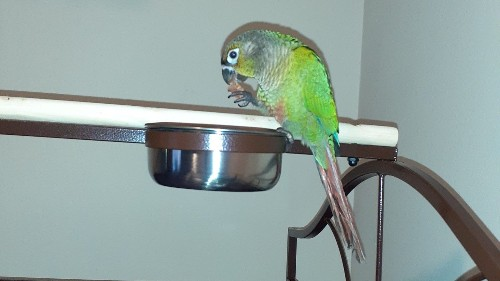 Parrot shouts 'fire' to warn family about blaze in kitchen
