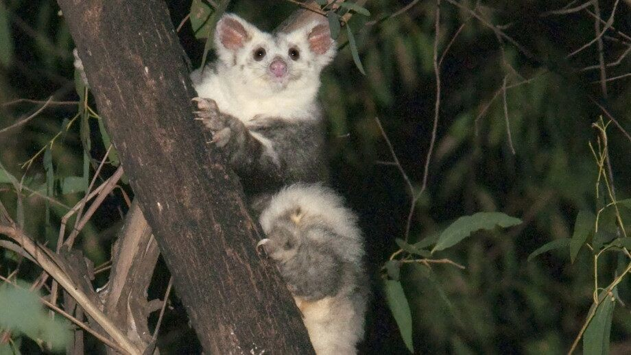 Two new mammals unknown to science found in Australia