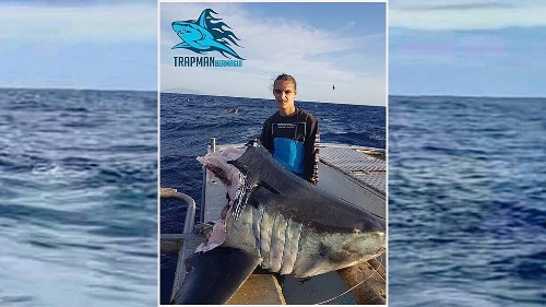 Enormous shark found with head bitten off by even bigger beast off Australia coast