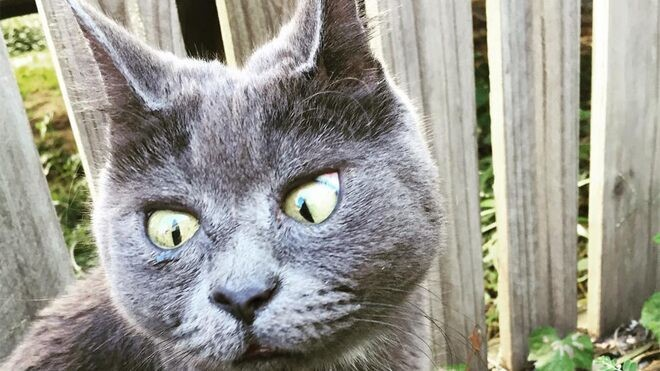 Cat with permanently surprised look defies odds to live