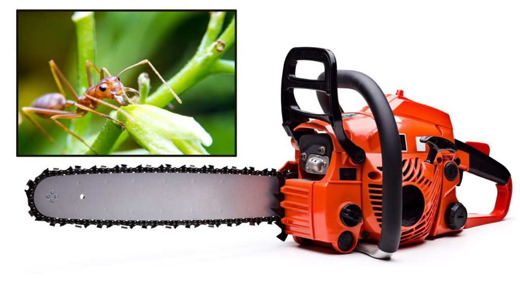 North Carolina county warns of chainsaw accidents, fire ants in wake of Isaias