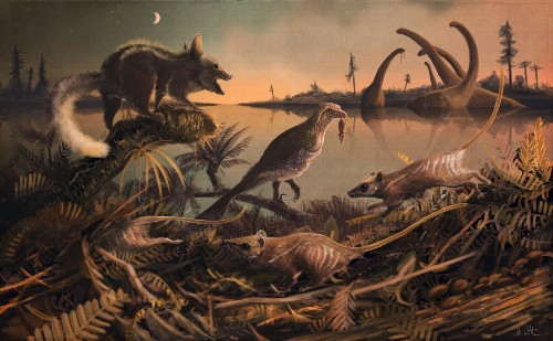 These rodent-like creatures are the earliest known ancestor of humans, whales and shrews