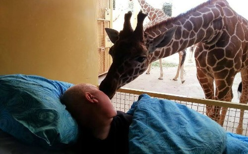 Giraffe 'kisses' goodbye dying zoo worker in touching photograph