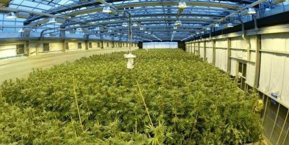 Marijuana is Needed - Magazine cover