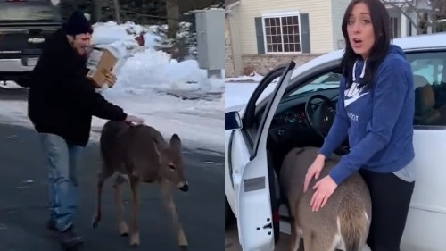 Deer walks Minnesota man home, demands to be petted in adorable viral video