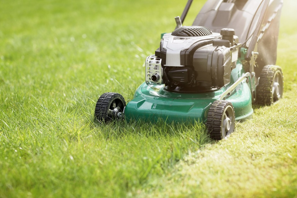 Man shocked when neighbor cuts only part of shared lawn: 'Glorious pettiness'