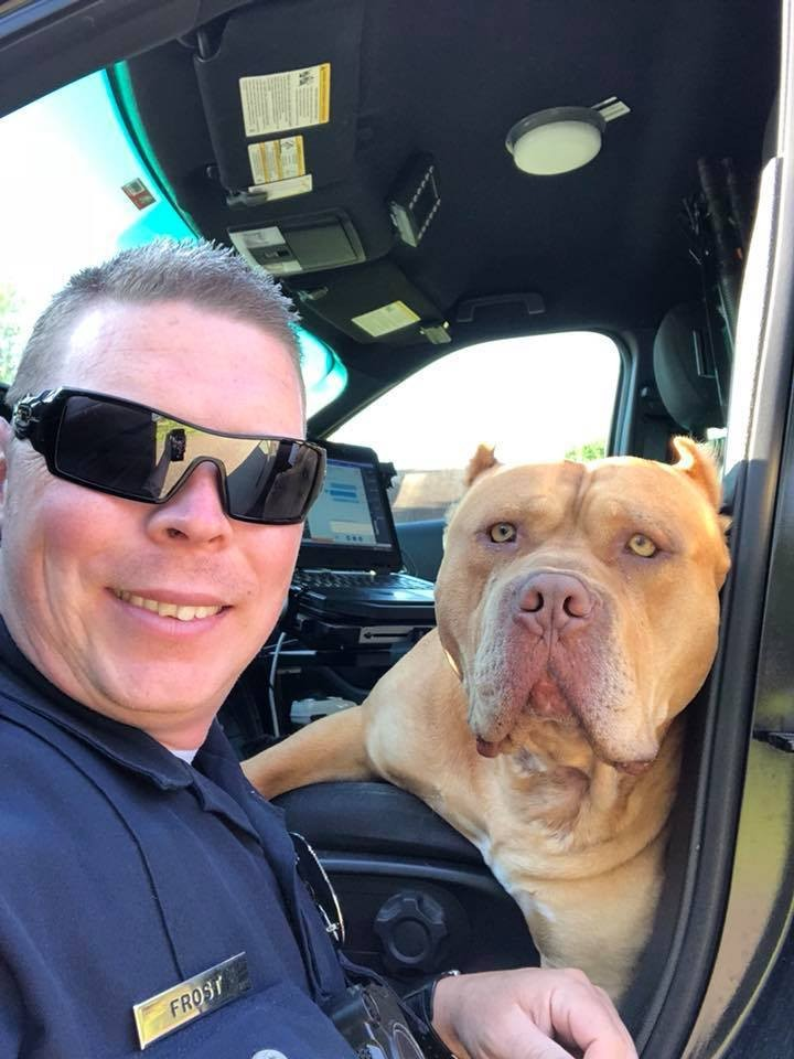 Viral Facebook post shows Texas police officer posing with dog after responding to call of 'vicious' animal