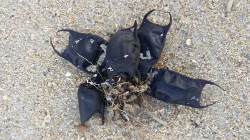 Strange black 'pouches' washing up on Carolina beaches aren't 'pieces of plastic,' officials say