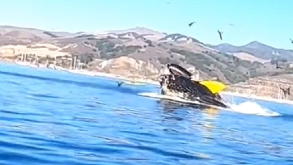 Humpback whale almost swallows 2 kayakers off California coast