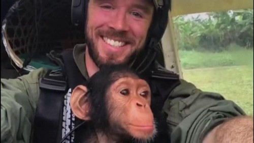 Orphaned baby chimp rescued from poacher, snuggles pilot on rescue flight