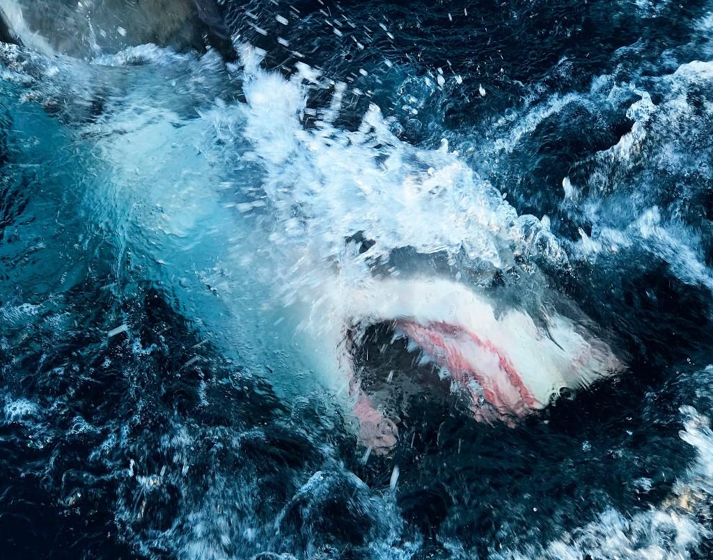 Record-breaking shark breach captured on camera