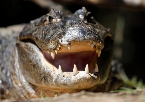 Crane 'escorts' alligator across Florida golf course in viral video