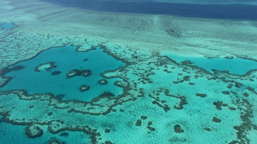 La Grande barrière de corail, la merveille qui valait 37 milliards d'euros