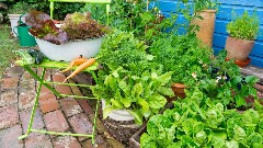 Discover growing vegetables