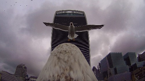 Ubisoft Sent Us Pictures of an Eagle in London to Promote Assassin's Creed Syndicate, Here They Are - GameSpot