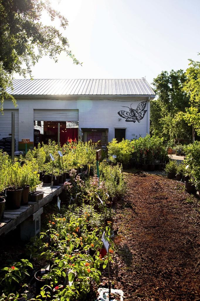 Seven Standout Southern Nurseries