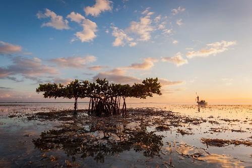 The Everglades' Wild Hope