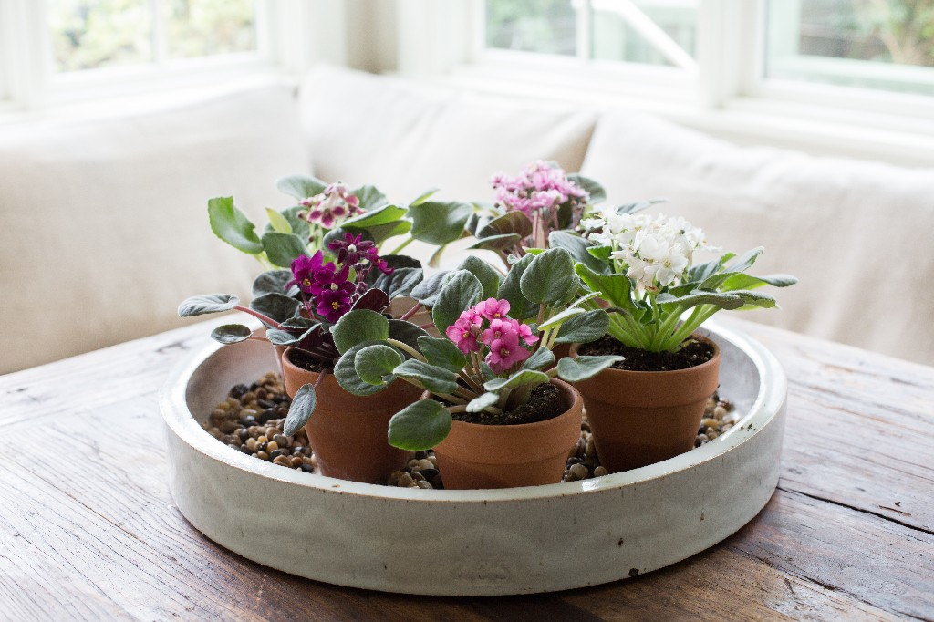 The 10 Hardest Houseplants to Keep Alive, According to Gardenista Readers