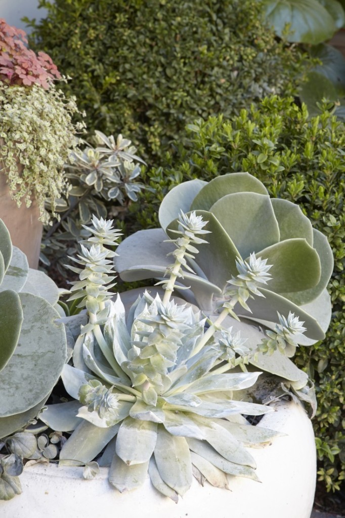 Everything You Need to Know About Succulents - Gardenista