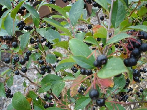 Trend Alert: 5 Superfruits to Grow