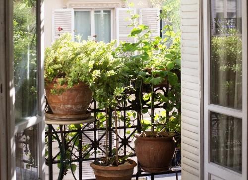 Indoor Plants: 11 Ways to Help Houseplants this Month