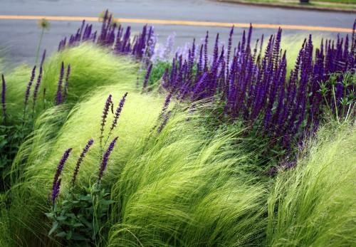 Unconventional Wisdom: 8 Revolutionary Ideas for Your Garden from Thomas Rainer