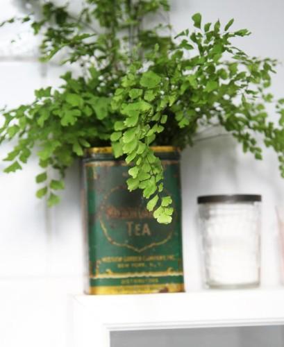 DIY: Maidenhair Fern for Bathroom Greenery