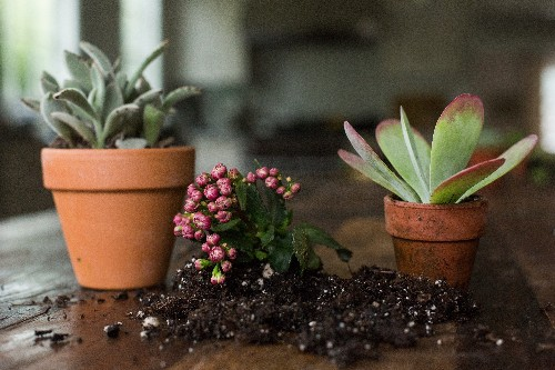 Succulents Explained: How to Identify and Grow 12 Favorites - Gardenista