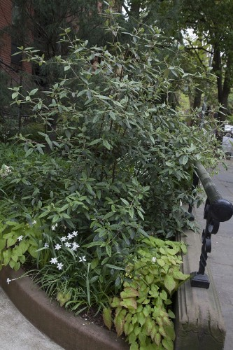 Garden Visit: At Home in Brooklyn Heights with Artists Maria Robledo and Holton Rower