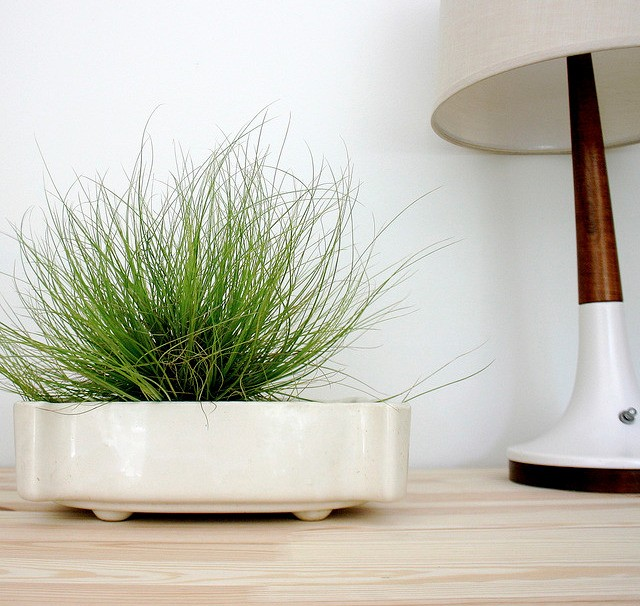 5 Favorites: Mini Houseplants for Apartment Living