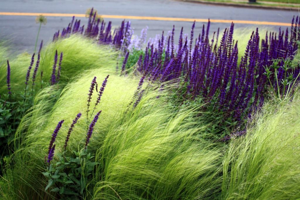 Unconventional Wisdom: 8 Revolutionary Ideas for Your Garden from Thomas Rainer - Gardenista