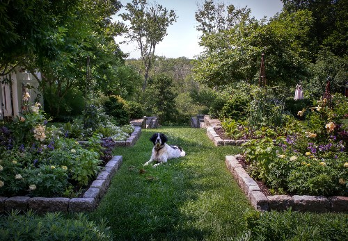 Landscape Designer Visit: A Charming Cottage Garden Outside of Boston