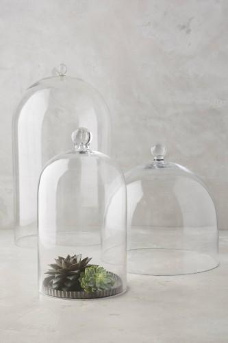 10 Easy Pieces: Glass Cloche Terrariums