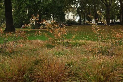 Almost Private: A Secret River Garden in Central London - Gardenista