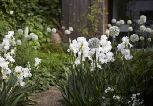 Designer Visit: Sheila Jack's White Garden in West London