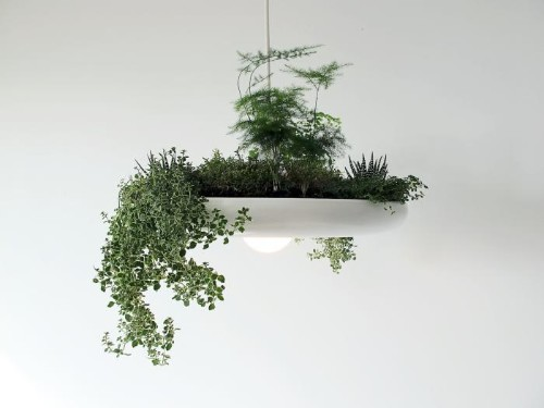 From Canada, a Chandelier That's Also an Herb Garden