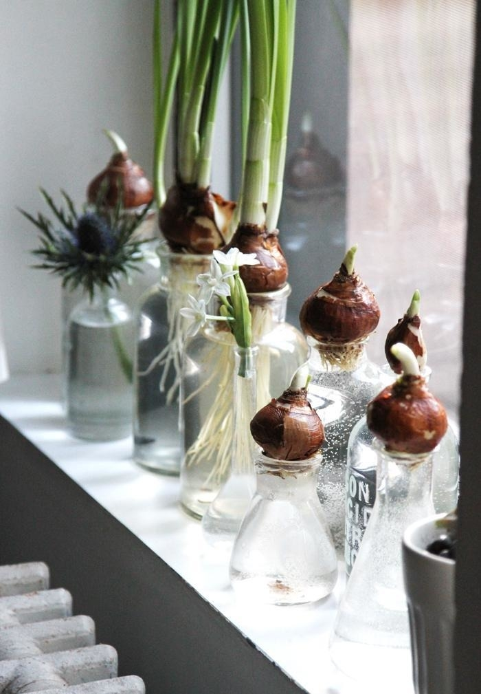Growing stuff indoors and out - Magazine cover