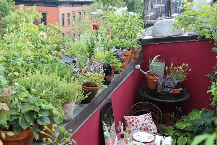 10 Secrets for Growing an Urban Balcony Garden