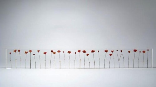 Botanicals as Art from Japan's Studio Note