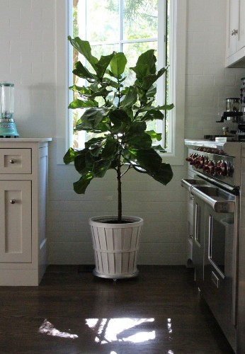 11 Ways to Keep Houseplants Happy in Winter
